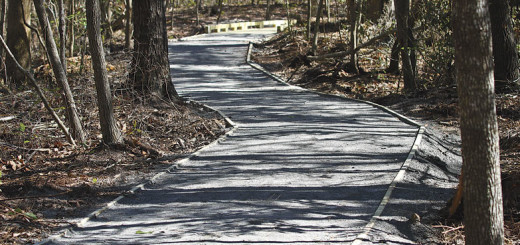 Part of the new loop trail around Sandy Run Park.