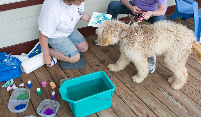 Dudley gets his paws painted.
