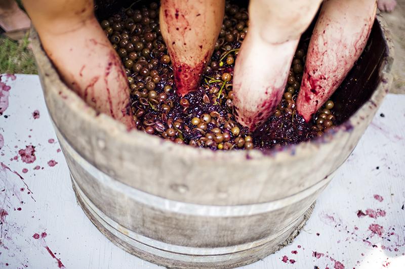 grapes sanctuary entrep