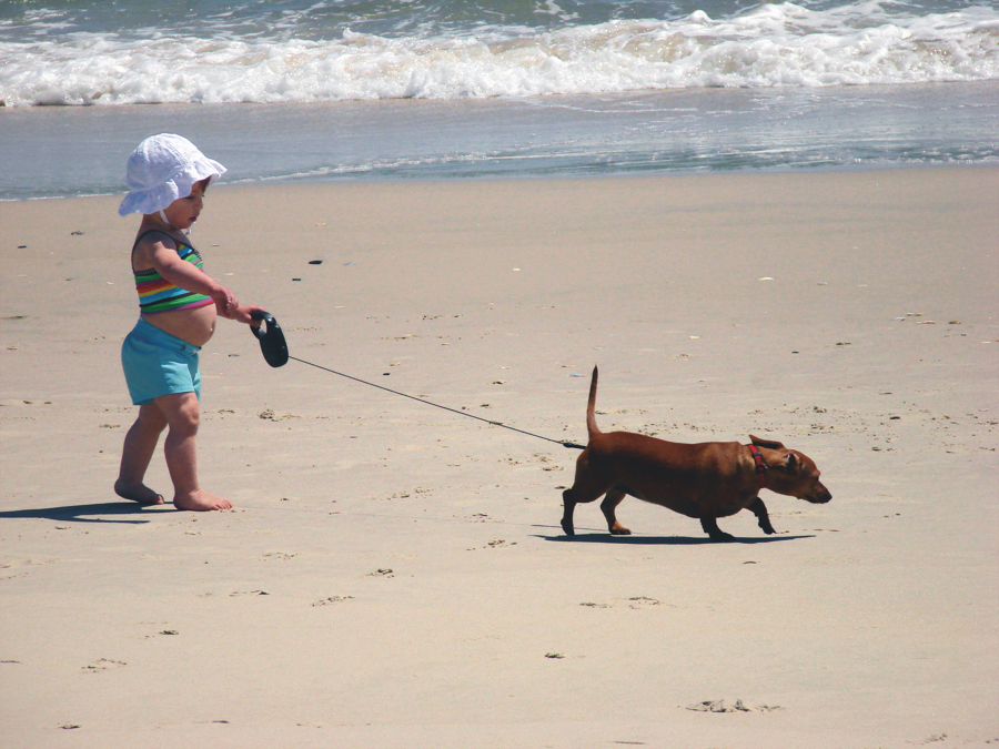 Dogs must be on a leash at all times on Outer Banks federal land. Photo, Outer Banks Visitor's Bureau.