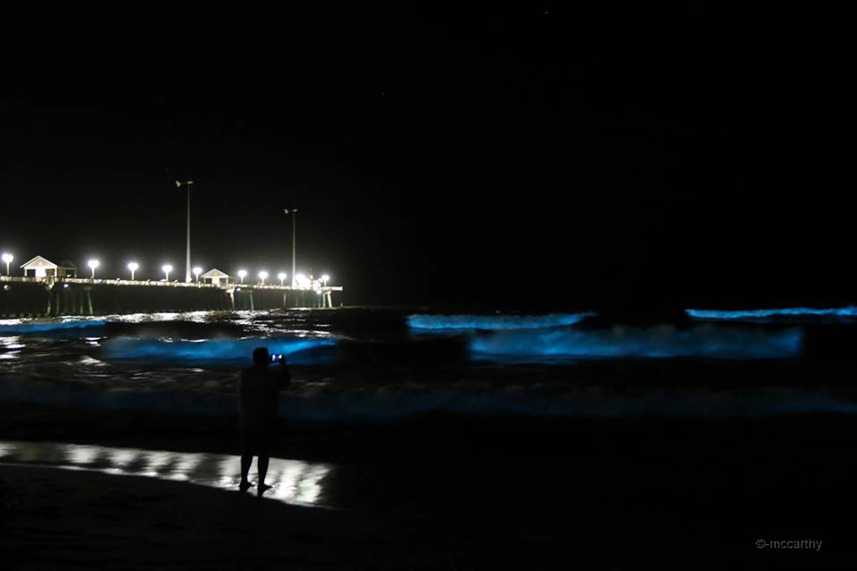The sea aglow with bioluminescence at Jennette's Pier. Photo, Mickey McCarthy.