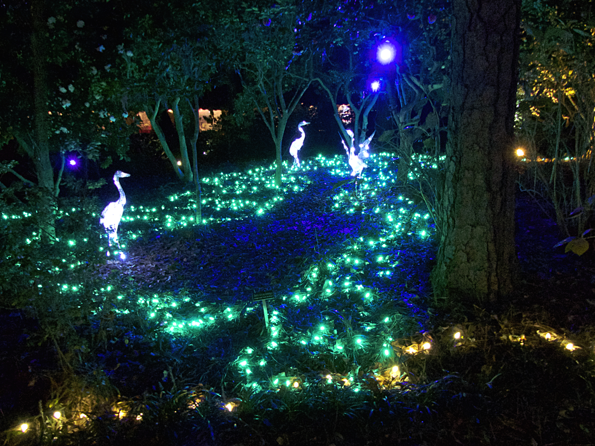 Heron pond. The lights creating a wonderful illusion of water, plants and herons.