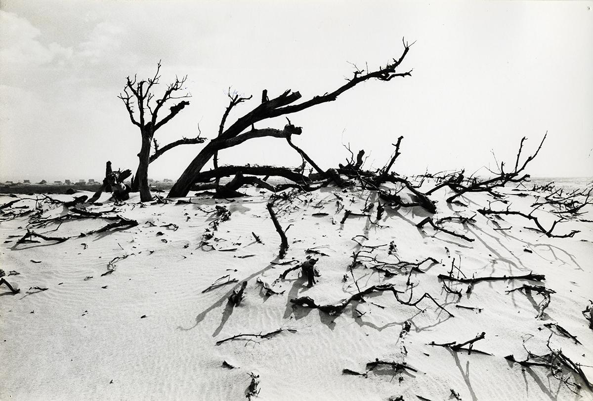 migratory dune_obx