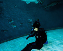 Leslie Dives With Sharks: North Beach Sun's Double Dog Dare!
