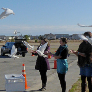 Dove release with When Doves Fly. The doves will fly back to their roost in Kitty Hawk.