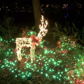 Reindeer among holly.